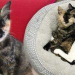แมวน้อยตาบอด เป็นเพื่อนที่สมบูรณ์แบบให้ลูกแมวขี้เหงา ทำให้มันไม่โดดเดี่ยวอีกต่อไป