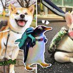 20 ภาพสัตว์เลี้ยง 'แบกเป้' พกความน่ารักเต็มกระเป๋า พร้อมออกไปท่องโลกกว้าง