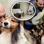 คุณหมอทึ่งเมื่อคนไข้ที่ป่วยเป็นมะเร็งอาการดีขึ้น หลัง 'สุนัขเพื่อนรัก' ของเขามาเยี่ยม