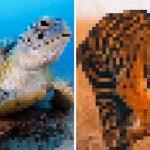 ศิลปินผู้รักสัตว์ สร้างงานศิลปะเบลอๆ เพื่อเตือนว่าพวกมันใกล้สูญพันธุ์มากแค่ไหน
