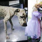 สาวรับเลี้ยง 'สุนัขถูกละเลย' มันจึงตอบแทนด้วยการเป็นแหล่งความสุขของครอบครัว