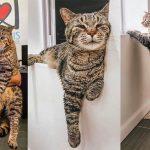 น้องแมวอ้วนดังไม่หยุด ล่าสุดเผยชีวิตดี๊ดี เมื่อมีทาสพาไปอยู่บ้านหลังใหม่แล้ว