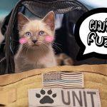 เจ้าแมวตำรวจตัวน้อย ได้ชื่อของตัวเองแล้ว หลังทุกคนช่วยกันโหวตชื่อให้มัน!!