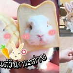 """""""วันกระต่าย"""" ทั้งที เชิญรับชม 20 ภาพแสนน่ารักของเจ้าหูยาวกันให้เต็มเหนี่ยว!!"""