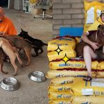 เจ้าของศูนย์ไอเดียแจ่ม ฉลองวันเกิดด้วยการขอรับบริจาคอาหารสุนัข เพื่อทำเป็นบัลลังก์