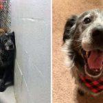 สุนัขที่เคยตัดสินใจยอมแพ้และรอความตาย กลายเป็นหมาที่ยิ้มไม่หุบหลังได้รับการช่วยเหลือ
