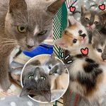 แม่แมวคอยปกป้องลูกๆ จนตัวเองได้รับบาดเจ็บ แต่โชคดีที่อาสาสมัครมาช่วยไว้ทันเวลา