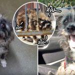 สุนัขถูกครอบครัวทิ้ง ได้แต่หวังว่าจะมีใครสักคนได้ยินเสียงร้องขอความช่วยเหลือของมัน