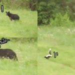 """จะเกิดอะไรขึ้นเมื่อ """"ลูกหมี"""" และ """"สกั๊งค์"""" บังเอิญเจอกันครั้งแรก จะหนีหรือจะสู้!?"""