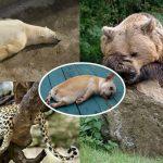 รวมภาพสุดฮาของเหล่าสัตว์โลกที่มี 'อาการเมาค้าง' หลังจากไปจัดหนักมาทั้งคืน