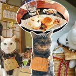 """พาชม """"วัดเหมียวเหมียว"""" วัดญี่ปุ่นสำหรับทาสแมว มีเจ้าอาวาสและเด็กวัดเป็นแมวจริงๆ!!"""
