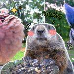 หญิงจับภาพเพื่อนสัตว์ทุกตัว ที่แวะมากินอาหารบ้านเธอ จนมีรูปเยอะเป็นอัลบั้ม!!
