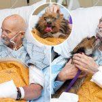 สัตวแพทย์และหมาสุดรัก ขอบอกลากันเป็นครั้งสุดท้าย ก่อนต้องแยกจากกัน