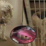 หมาถูกเจ้าของทิ้งเพียงเพราะ 'ปากเหม็น' ได้คุณหมอช่วยไว้ และส่งไปอยู่บ้านใหม่