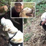หนุ่มเจอหมาของเพื่อนบ้าน ที่หายตัวไปนานร่วมอาทิตย์ ช่วยพามันกลับไปหาเจ้าของ