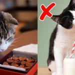 ทาสแมวควรรู้!! นี่คืออาหาร 10 อย่างที่ไม่ควรให้แมวทาน เพราะอาจเป็นภัยต่อมัน