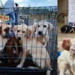 หญิงสาว 3 คนช่วยกันรักษาชีวิตหมา ที่ถูกนำไปใช้ในตลาดค้าเนื้อสุนัขที่ในจีน