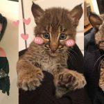 หญิงเห็นลูกแมวกลางถนน รีบช่วยเพราะกลัวมันถูกรถชน รู้ทีหลังว่ามันเป็น 'แมวป่า'