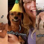รวม 20 ภาพของชีวิตที่มีหมา มีเจ้าตัวป่วน 4 ขาเจอแต่เรื่องป่วนชวนฮาไม่เว้นวัน