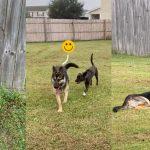 หมาและหมาข้างบ้าน สานสัมพันธ์ข้ามรั้วกันนาน ช่วยกันพังรั้วเพื่อจะได้ข้ามมาเจอกัน
