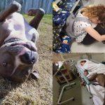 หมาช่วยชีวิตหญิงสาวไว้ และอยู่ดูแลเธอในห้องผู้ป่วย เธอจะได้อุ่นใจที่มีมันข้างๆ