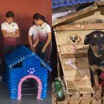 เด็กๆ ช่วยเหลือทั้งหมาและชุมชน ด้วยการสร้างบ้านให้หมาจรจัด จากวัสดุเหลือใช้