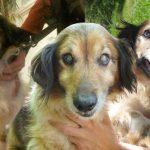 อาสาสมัครพบหมาตาบอดในบ้านร้าง จึงช่วยเก็บมันมา และทำให้ชีวิตมันมีความหมาย