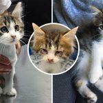 ลูกแมวนิ้วเท้าเกินมีปัญหาสุขภาพ คนใจดีจึงช่วยเอาไว้ จนมันกลายเป็นแมวตัวใหม่