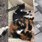 แมวตัวแสบแกล้งเพื่อนโดยคิดว่าไม่มีใครเห็น แต่กล้องวงจรปิดจับภาพไว้หมดแล้ว!!