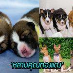 เผยภาพสุดน่ารักของ 'หลานคุณทองแดง' ทั้ง 8 สุนัข พร้อมชื่อพระราชทานจาก 'ต้นไม้'