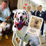 'Benji' สุนัขบำบัดผู้มีนามบัตรส่วนตัว เอาไว้แจกเป็นที่ระลึกให้ผู้คนที่มันไปให้กำลังใจ