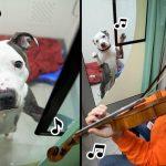 ชายใจดีไปเล่นไวโอลีนให้สุนัขที่เคยถูกทำร้ายฟัง เพื่อให้พวกมันเชื่อใจมนุษย์อีกครั้ง