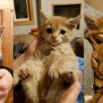 ลูกแมวถูกช่วยเหลือจากกองเศษไม้ ได้สัมผัสความสุขจากการถูกกอดเป็นครั้งแรก