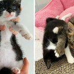 ลููกแมวจรจัดถูกพบอยู่ตามลำพัง มีความสุขมากๆ เมื่อมีเพื่อนใหม่ให้มันกอด