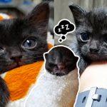 ลูกแมวมีขนาดเล็กกว่าปกติ แต่มันเป็นนักสู้บวกกับได้รับการช่วยเหลือ จึงเริ่มเติบโตขึ้น