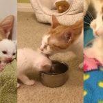 แมวจรหอบลูกไปด้วยทุกที่ แม้ได้รับการช่วยเหลือแล้ว มันก็ยังเฝ้าดูลูกไม่ให้คลาดสายตา