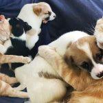 แม่แมวจรจัดผู้เดียวดาย เพิ่งเสียครอบครัวของตัวเองไป รับลูกหมามาดูแลเหมือนลูก
