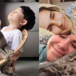 ผลวิจัยชี้ แมวมีนิสัยติดคนมาก ยิ่งกว่าสุนัขที่ขึ้นชื่อเรื่องความซื่อสัตย์เสียอีก