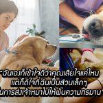 สัตวแพทย์โพสต์บอกความรู้สึก ที่ต้องเป็นคนการุณยฆาตสุนัข ทำเอาซึ้งน้ำตาไหล