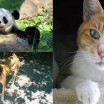 มาดู 16 ข้อเท็จจริงแสนน่ารักฉบับสัตว์โลก ที่จะทำให้คุณมองพวกมันน่ารักยิ่งกว่าเดิม