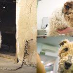 น้องหมาถูกล่ามโซ่ทั้งชีวิตและไม่มีชื่อด้วยซ้ำ คนใจดีจึงเข้าช่วยเหลือและมอบชีวิตใหม่ให้