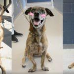 'น้องหมา' ที่ได้รับการช่วยเหลือ เซอร์ไพรส์ทุกคนด้วย 'ท่านั่งสุดน่ารัก' ของมัน