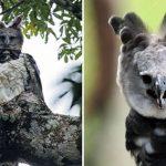 พบกับ 'อินทรีฮาร์ปี' นกที่ใหญ่และทรงพลังที่สุดในโลก กินสัตว์ทุกชนิดที่ตัวเล็กกว่า!?