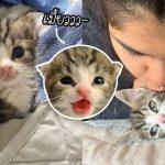 'ลูกแมวกำพร้า' ถูกทิ้งจนเกือบจะไม่รอด แต่คนใจดีช่วยไว้ทันเวลา มันจึงเริ่มเติบโตขึ้น