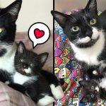 น้องแมวหนวดตัวน้อย ได้มาเจอกับพี่แมวที่มีหนวดคล้ายกัน ดูแล้วเหมือนพ่อลูกเลย