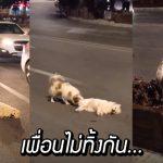 เพื่อนรักของเจ้าหมาถูกรถชน แต่มันไม่หนีไปไหน คอยปกป้องร่างเพื่อนนาน 3 ชั่วโมง