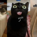 20 เหตุผลที่ยืนยันว่า 'แมวเป็นสิ่งมีชีวิตที่เหนือโลกมากที่สุด' ด้วยวีรกรรมที่คาดเดาไม่ได้