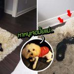 พรมที่บ้านบังเอิญสีเหมือนหมา ทำให้มันซ่อนตัวได้โคตรเนียน ราวใช้ผ้าคลุมล่องหน