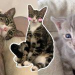แม่แมวจรจัดมือใหม่ ยังเลี้ยงลูกไม่ค่อยคล่อง แฮปปี้สุดๆ ที่มีมนุษย์ช่วยดูแลลูก