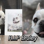 น้องหมาเฟรนช์บูลด็อกเซเลบ Bruley จากรายการ Queer Eye ได้ลาโลกนี้ไปแล้ว